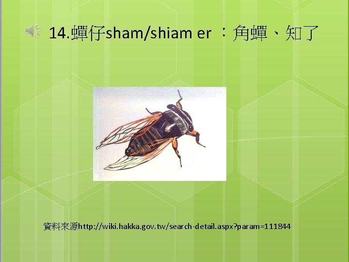 14. 蟬仔sham/shiam er :角蟬、知了 資料來源http: //wiki. hakka. gov. tw/search-detail. aspx? param=111844