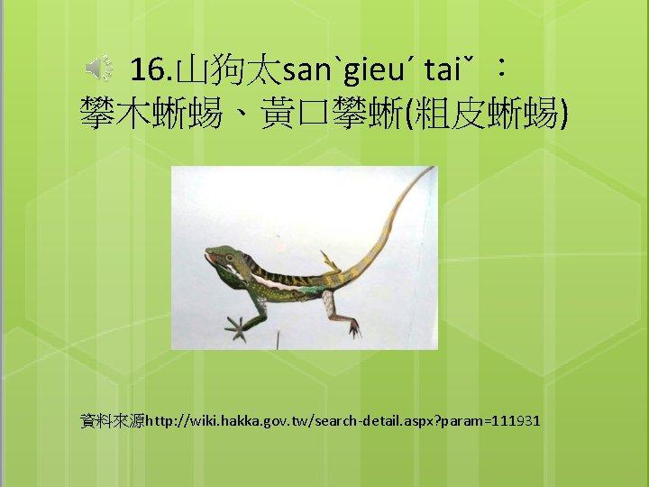 16. 山狗太sanˋgieuˊ taiˇ : 攀木蜥蜴、黃口攀蜥(粗皮蜥蜴) 資料來源http: //wiki. hakka. gov. tw/search-detail. aspx? param=111931