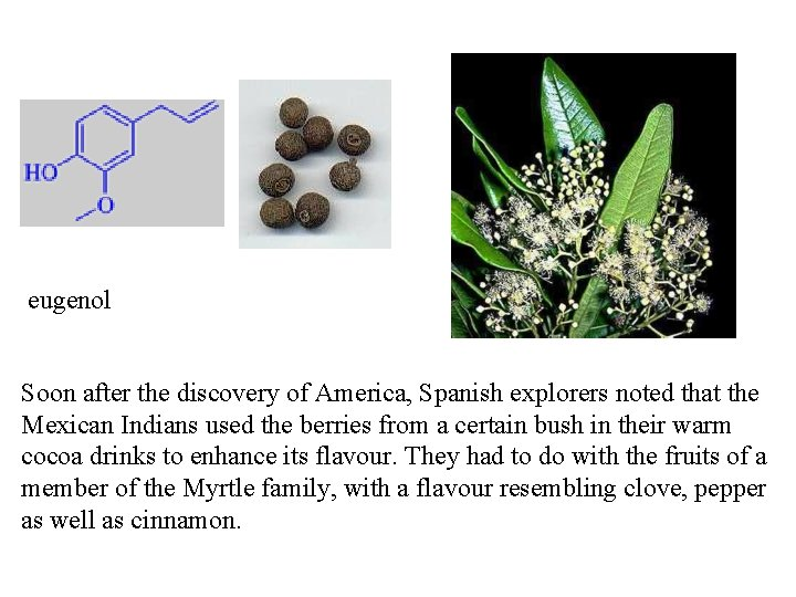 eugenol Soon after the discovery of America, Spanish explorers noted that the Mexican Indians