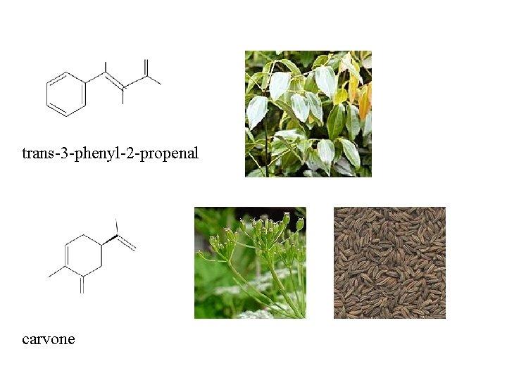 trans-3 -phenyl-2 -propenal carvone