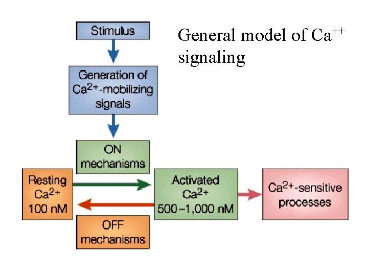 General model of Ca++ signaling