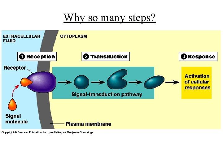 Why so many steps?