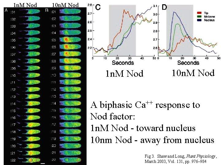 1 n. M Nod 10 n. M Nod A biphasic Ca++ response to Nod