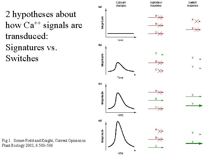 2 hypotheses about how Ca++ signals are transduced: Signatures vs. Switches Fig 1. Scrase-Field