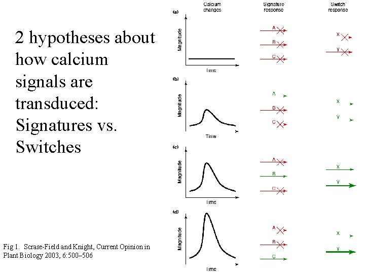 2 hypotheses about how calcium signals are transduced: Signatures vs. Switches Fig 1. Scrase-Field