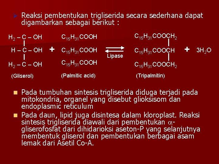 Ø Reaksi pembentukan trigliserida secara sederhana dapat digambarkan sebagai berikut : H 2 –