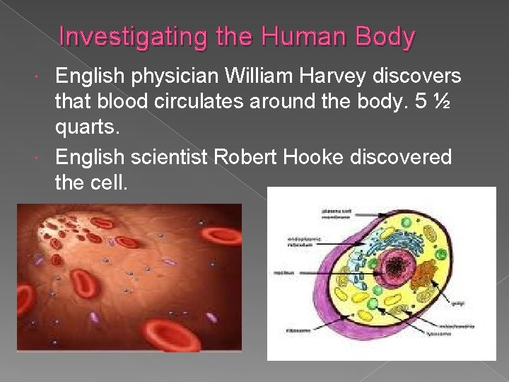 Investigating the Human Body English physician William Harvey discovers that blood circulates around the