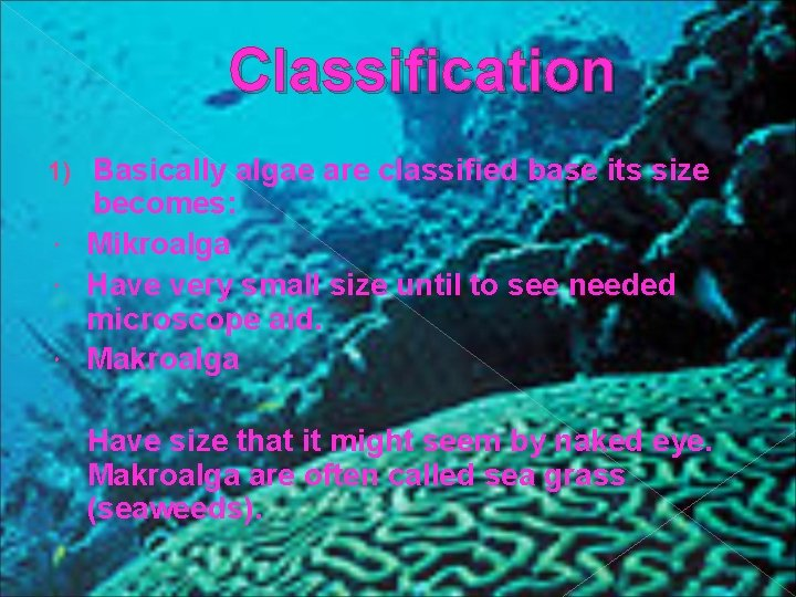 Classification Basically algae are classified base its size becomes: Mikroalga Have very small size