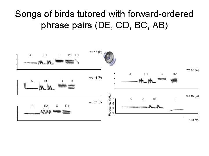 Songs of birds tutored with forward-ordered phrase pairs (DE, CD, BC, AB)