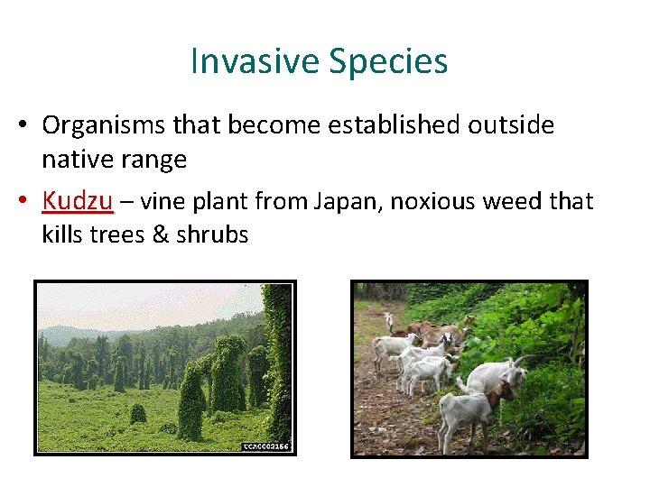Invasive Species • Organisms that become established outside native range • Kudzu – vine
