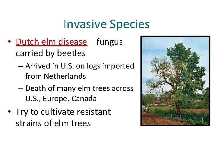 Invasive Species • Dutch elm disease – fungus carried by beetles – Arrived in