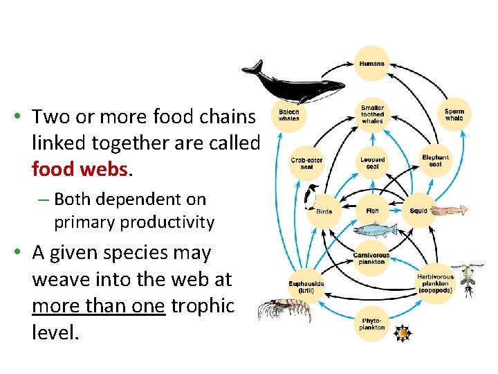 • Two or more food chains linked together are called food webs. –