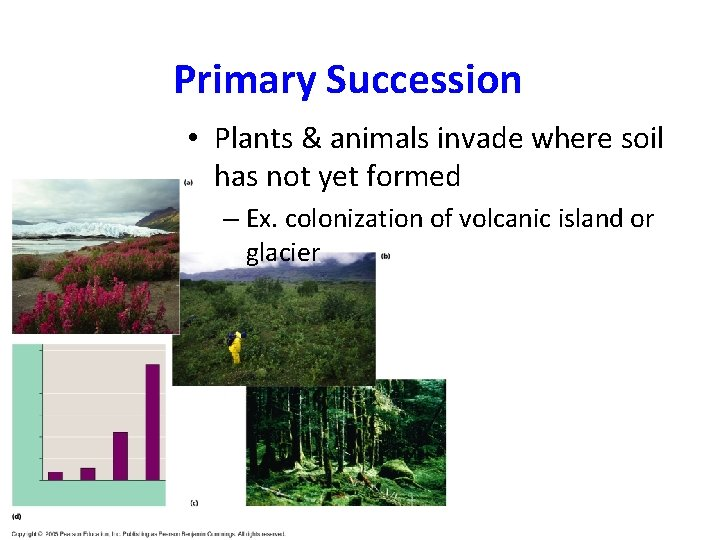 Primary Succession • Plants & animals invade where soil has not yet formed –