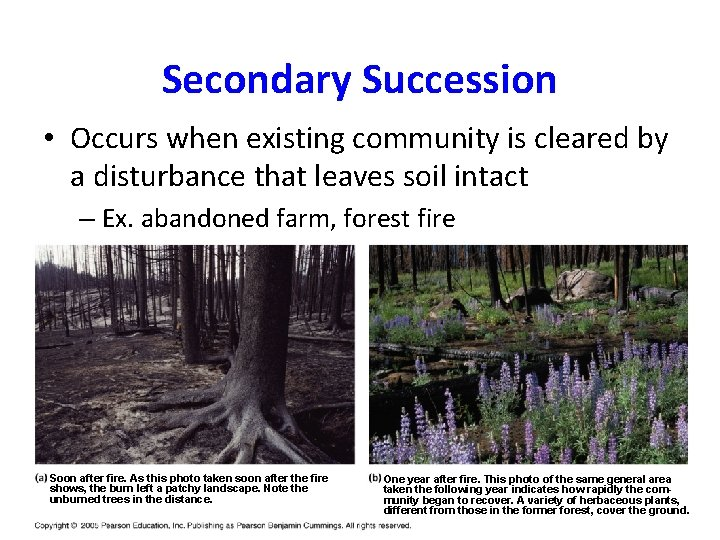 Secondary Succession • Occurs when existing community is cleared by a disturbance that leaves