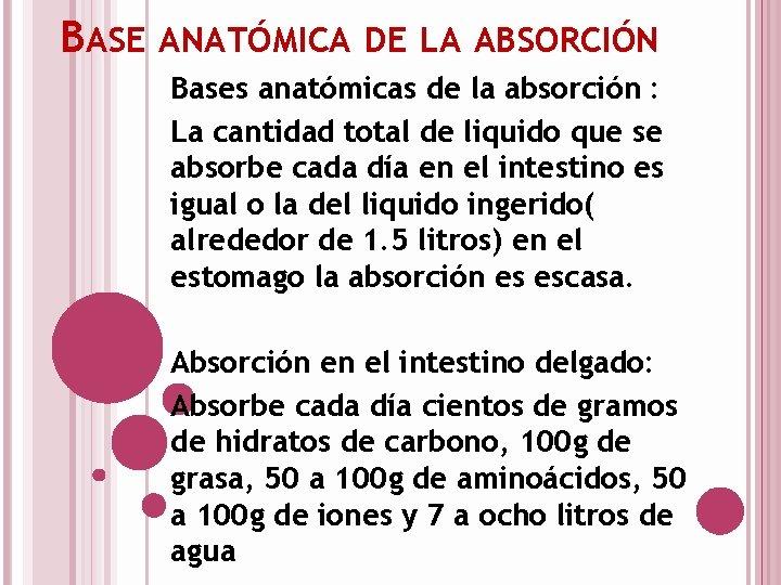 BASE ANATÓMICA DE LA ABSORCIÓN Bases anatómicas de la absorción : La cantidad total
