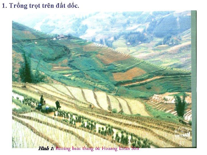 1. Trồng trọt trên đất dốc. Hình 1: Ruoäng baäc thang ôû Hoaøng Lieân