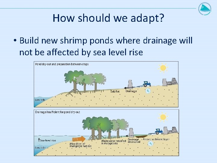 How should we adapt? • Build new shrimp ponds where drainage will not be