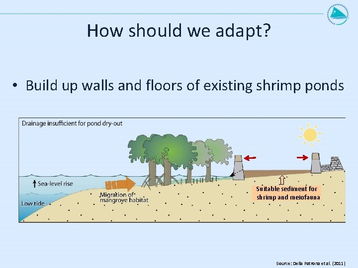 How should we adapt? • Build up walls and floors of existing shrimp ponds