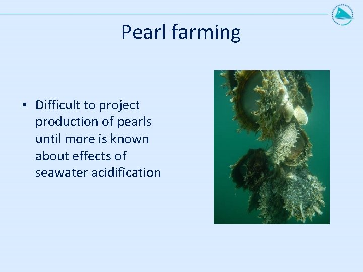 Pearl farming • Difficult to project production of pearls until more is known about