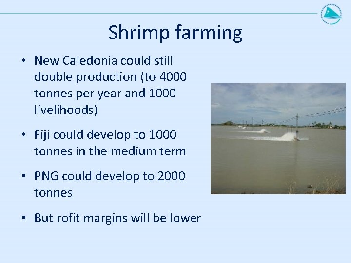 Shrimp farming • New Caledonia could still double production (to 4000 tonnes per year