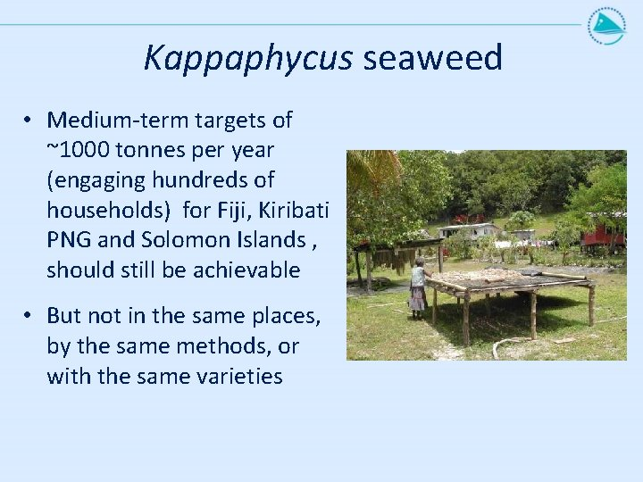 Kappaphycus seaweed • Medium-term targets of ~1000 tonnes per year (engaging hundreds of households)