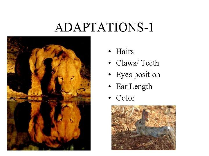 ADAPTATIONS-1 • • • Hairs Claws/ Teeth Eyes position Ear Length Color