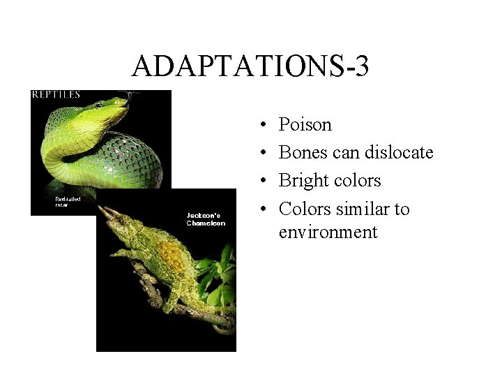ADAPTATIONS-3 • • Poison Bones can dislocate Bright colors Colors similar to environment