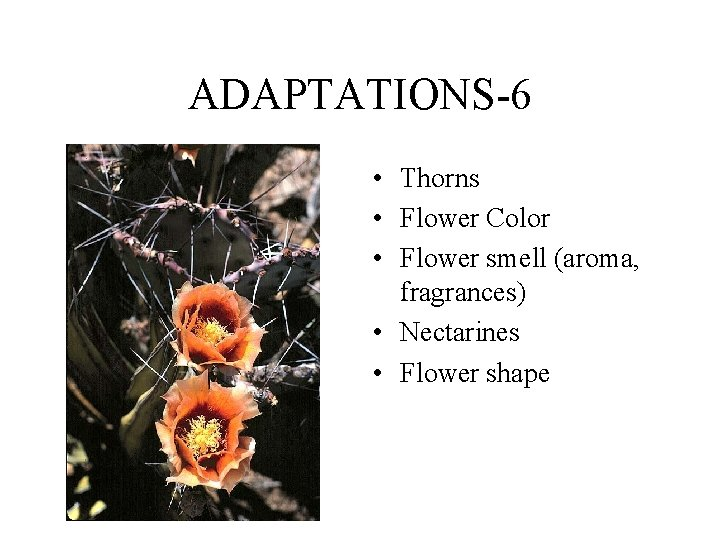 ADAPTATIONS-6 • Thorns • Flower Color • Flower smell (aroma, fragrances) • Nectarines •