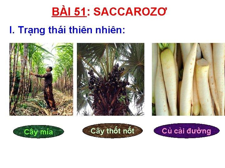 BÀI 51: SACCAROZƠ I. Trạng thái thiên nhiên: Cây mía Cây thốt nốt Củ