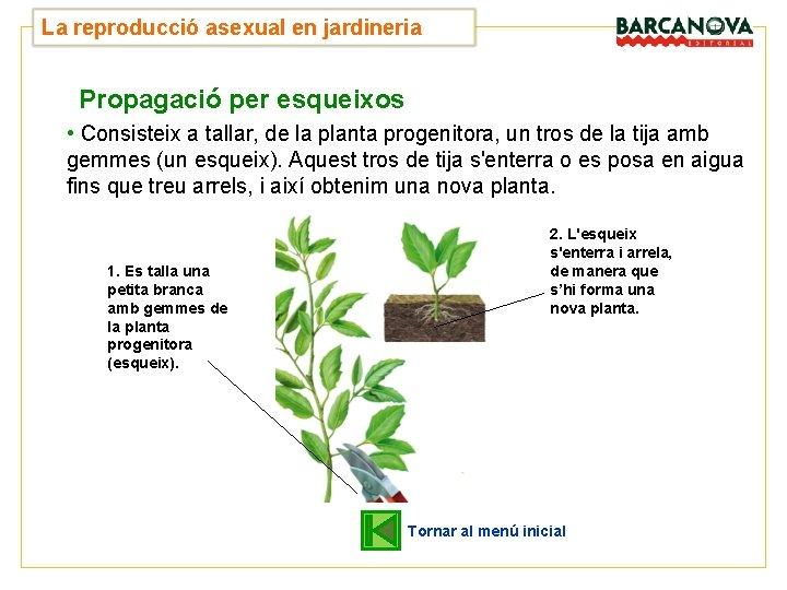 UNITAT La reproducció asexual en jardineria 4 Propagació per esqueixos • Consisteix a tallar,