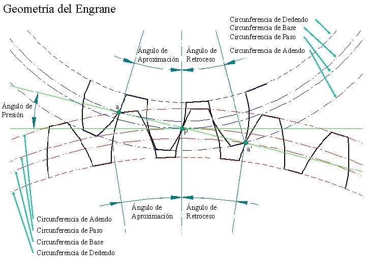 Geometría del Engrane Circunferencia de Dedendo Circunferencia de Base Circunferencia de Paso Ángulo de