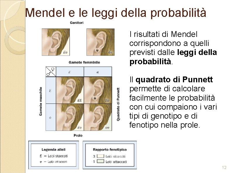 Mendel e le leggi della probabilità I risultati di Mendel corrispondono a quelli previsti