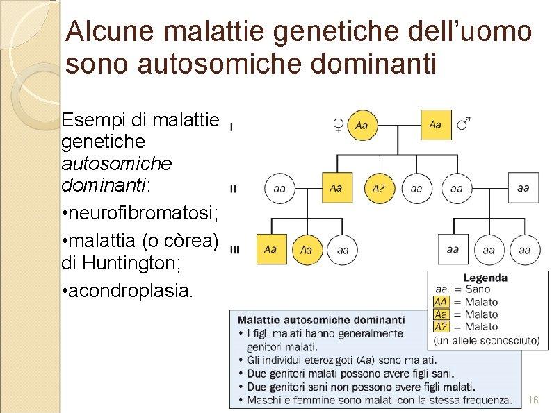 Alcune malattie genetiche dell'uomo sono autosomiche dominanti Esempi di malattie genetiche autosomiche dominanti: •