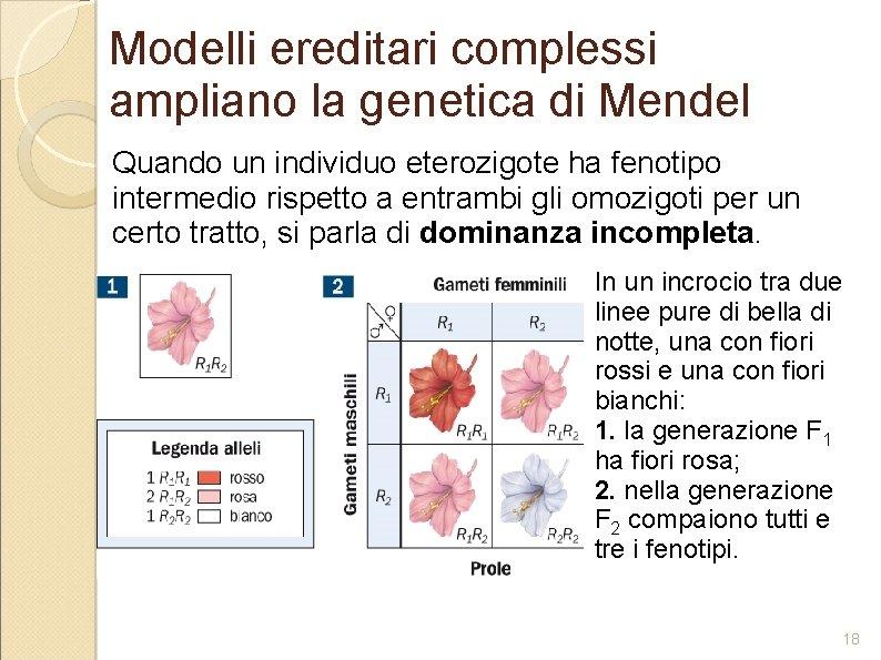 Modelli ereditari complessi ampliano la genetica di Mendel Quando un individuo eterozigote ha fenotipo