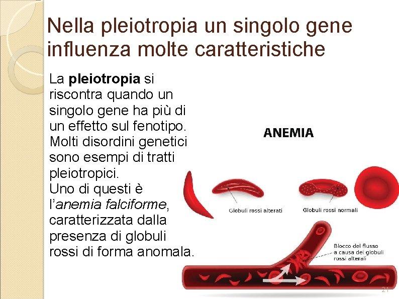 Nella pleiotropia un singolo gene influenza molte caratteristiche La pleiotropia si riscontra quando un