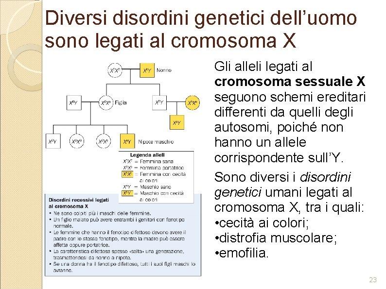 Diversi disordini genetici dell'uomo sono legati al cromosoma X Gli alleli legati al cromosoma