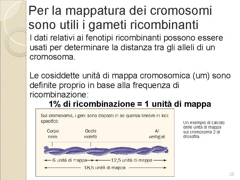 Per la mappatura dei cromosomi sono utili i gameti ricombinanti I dati relativi ai