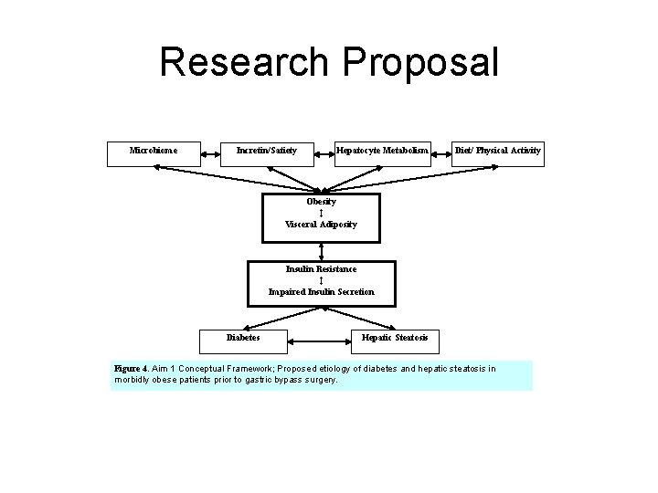 Research Proposal Microbiome Incretin/Satiety Hepatocyte Metabolism Diet/ Physical Activity Obesity ↕ Visceral Adiposity Insulin