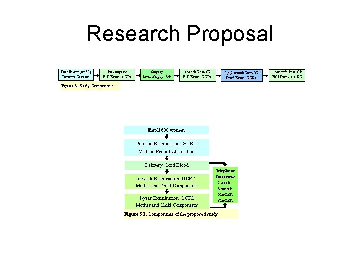 Research Proposal Enrollment (n=50) Bariatric Patients Pre-surgery Full Exam GCRC Surgery Liver Biopsy OR