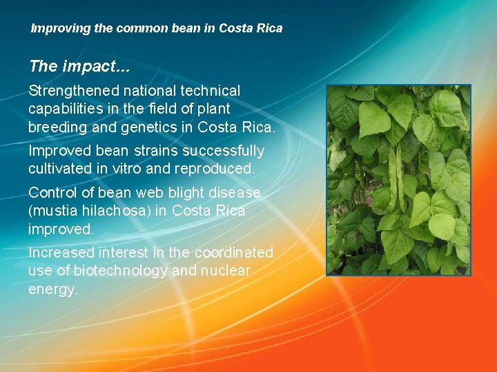 Improving the common bean in Costa Rica The impact… Strengthened national technical capabilities in
