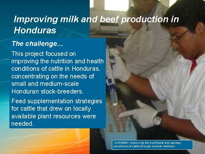 Improving milk and beef production in Honduras The challenge… This project focused on improving