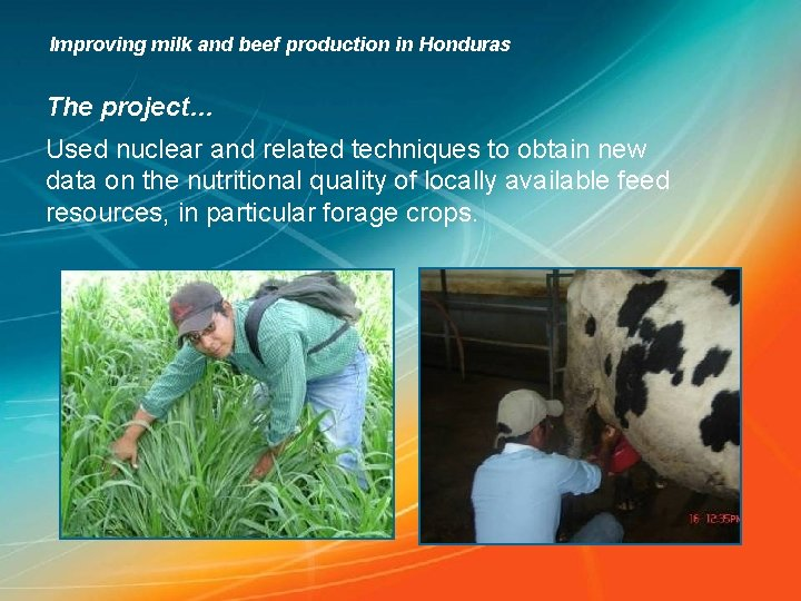 Improving milk and beef production in Honduras The project… Used nuclear and related techniques