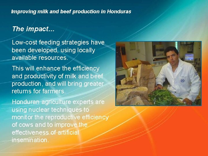 Improving milk and beef production in Honduras The impact… Low-cost feeding strategies have been