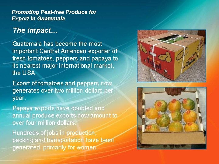 Promoting Pest-free Produce for Export in Guatemala The impact… Guatemala has become the most