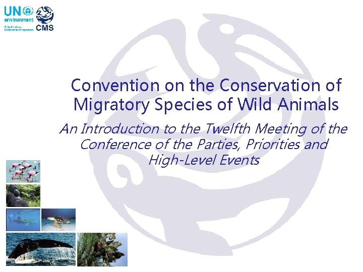 Convention on the Conservation of Migratory Species of Wild Animals An Introduction to the