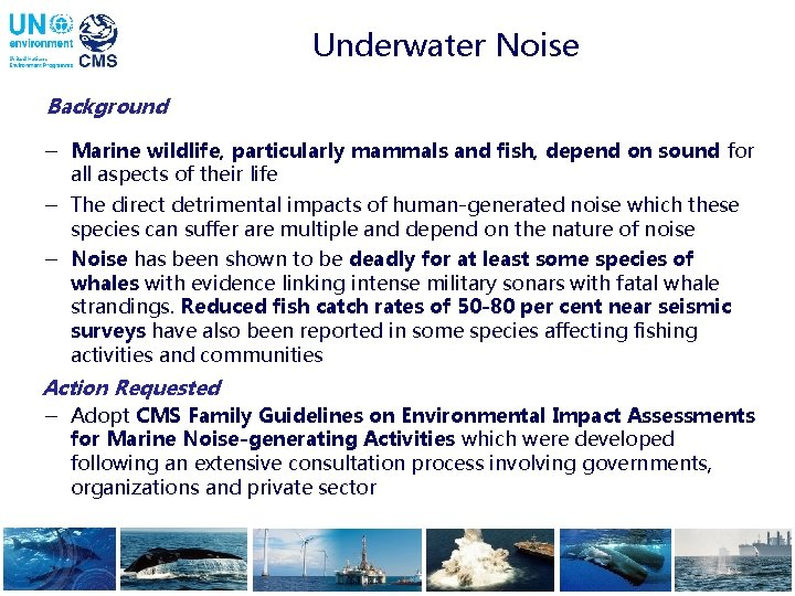 Underwater Noise Background - Marine wildlife, particularly mammals and fish, depend on sound for