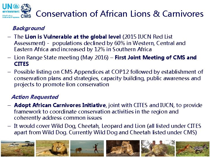 Conservation of African Lions & Carnivores Background - The Lion is Vulnerable at the