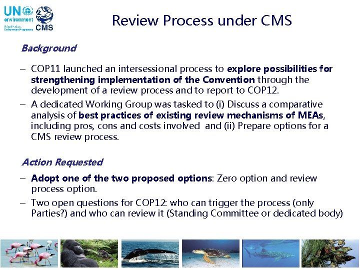 Review Process under CMS Background - COP 11 launched an intersessional process to explore