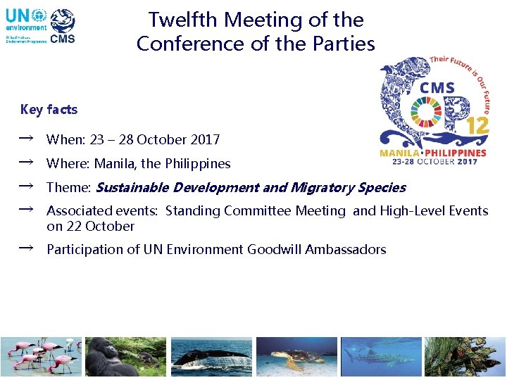 Twelfth Meeting of the Conference of the Parties Key facts → When: 23 –