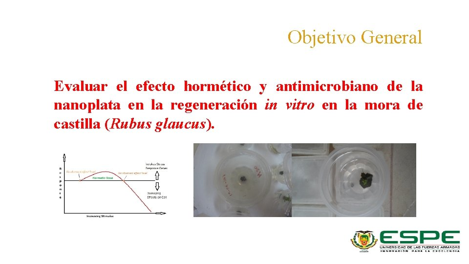 Objetivo General Evaluar el efecto hormético y antimicrobiano de la nanoplata en la regeneración